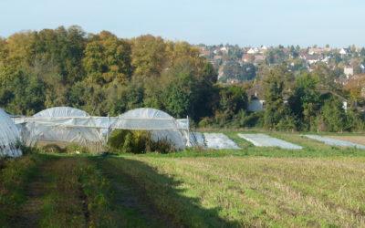 L'agriculture biologique francilienne se portebien