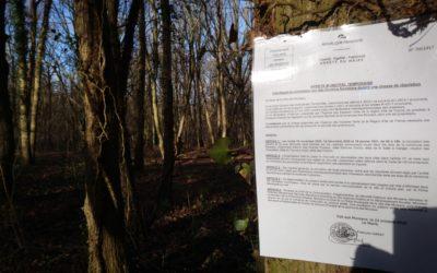 Dans la Forêt de Verneuil, un massacre àla tronçonneuse