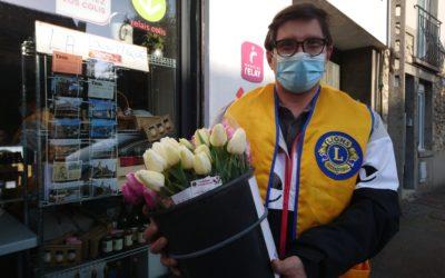 «Tulipes contre le cancer», antidote àla morosité ambiante